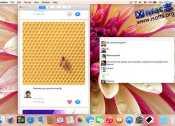 [Mac] 简洁易用的Instagram客户端 : Diapositive