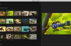 [Mac]快速方便的看图软件 : Phiewer