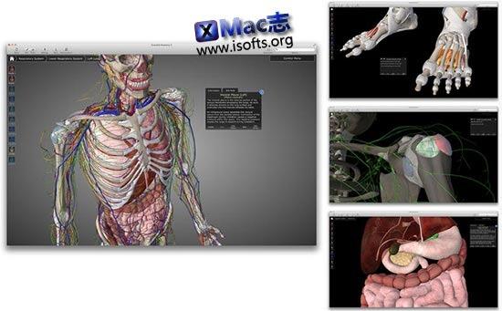 [Mac]3D解剖图学习参考工具 : Essential Anatomy